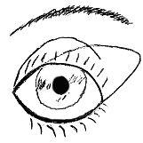 rundes-Auge